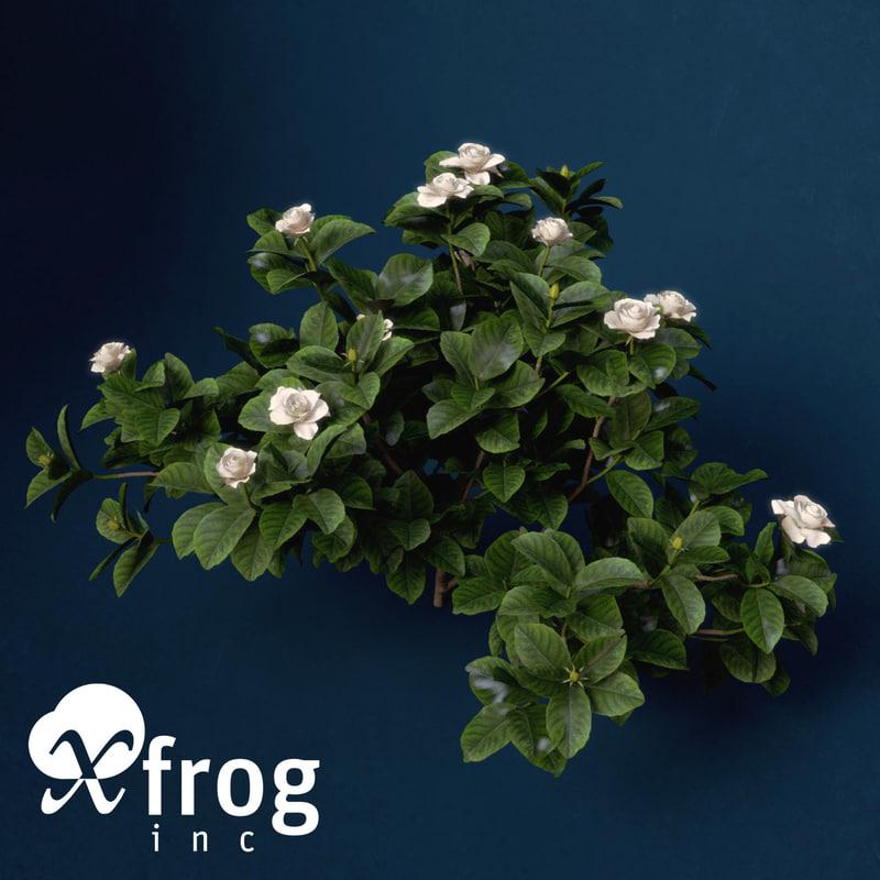 FL45-gardenia-8.jpg