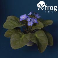XfrogPlants African Violet