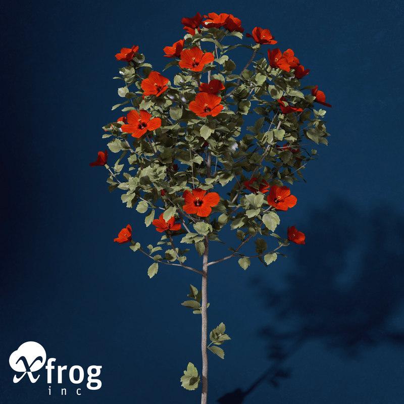 FL47-hibiscus-3.jpg