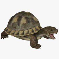 turtle animal 3d model