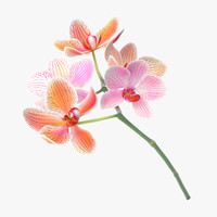 c4d orchid laying -