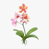 3d orchid standing -