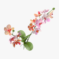 orchid natural group - 3d model