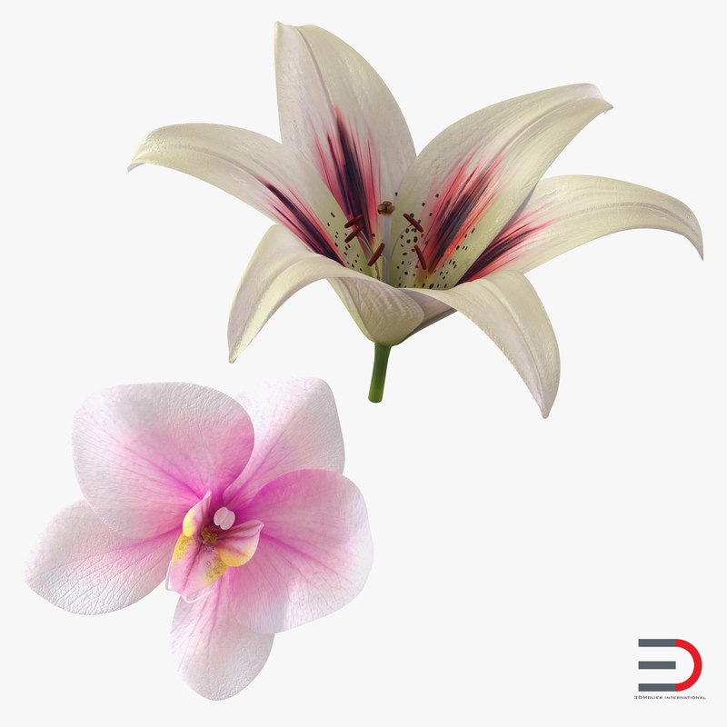 Flowers collection 3d models 01.jpg