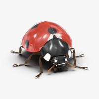 3d model ladybug bug lady