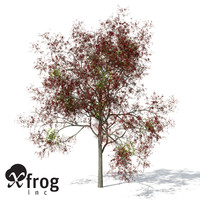 3d model flame forest tree flowering