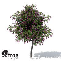 giant crape myrtle plant flowers 3d model