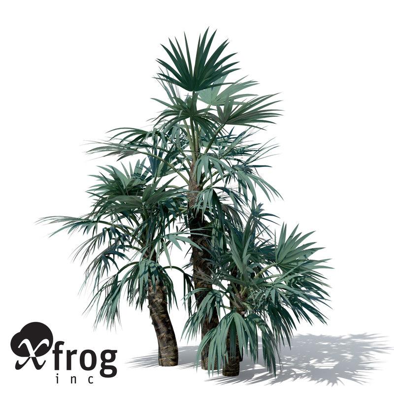 AS13-mazari-palm-8.jpg