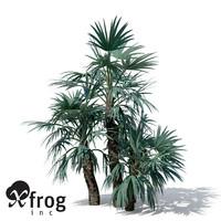 max mazari palm