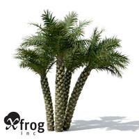 3d silver date palm tree model