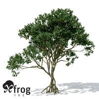 XfrogPlants Asiatic Mangrove