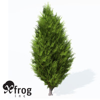 XfrogPlants Savin Juniper