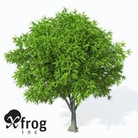 caucasian wingnut tree planted 3d c4d