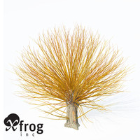 XfrogPlants Golden Willow