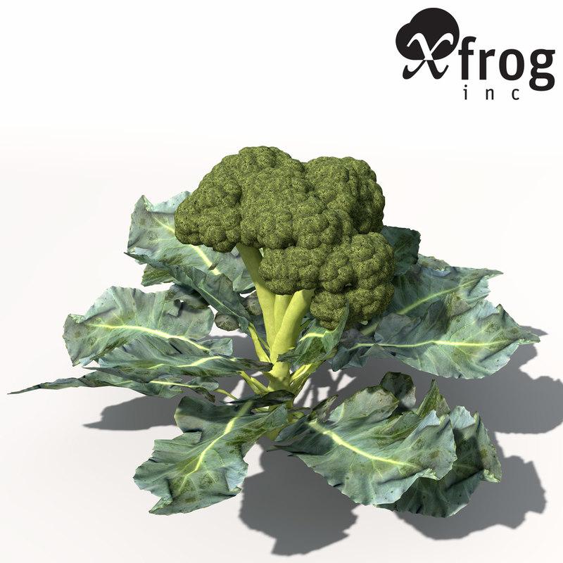 HG04-broccoli-7.jpg