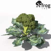 broccoli plant 3d model
