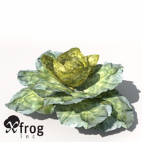 XfrogPlants Cabbage