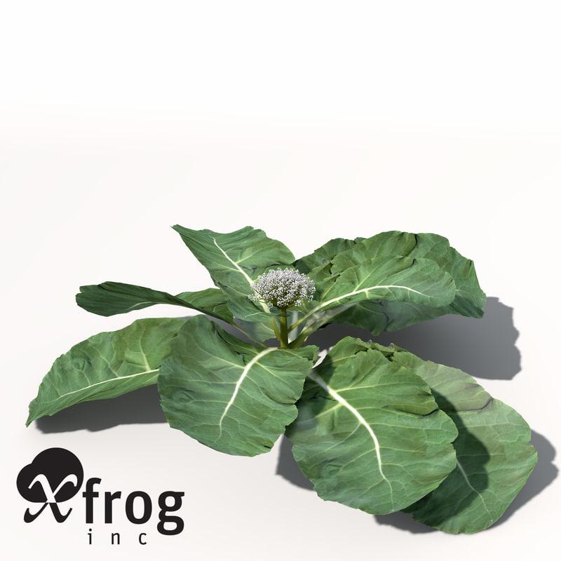 HG06-cauliflower-4.jpg