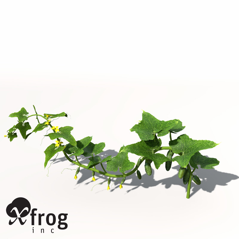 HG10-cucumber-9.jpg