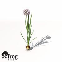 onion plant 3d model