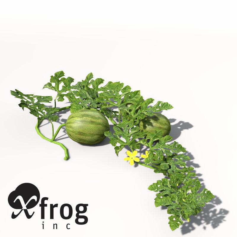 HG08-watermelon-9.jpg