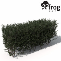 XfrogPlants Boxwood (hedges)