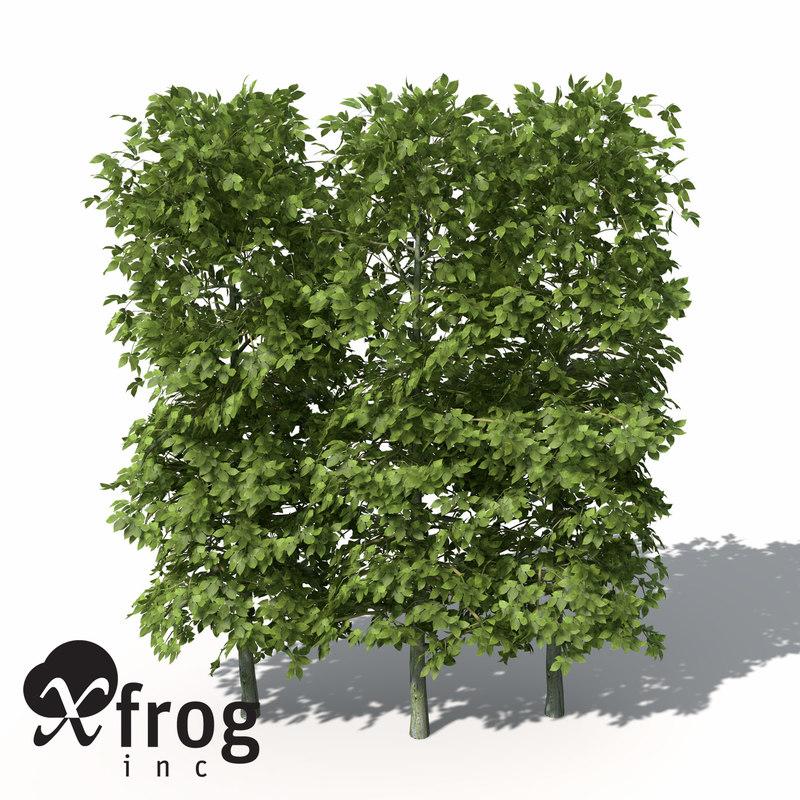 LS05-european-hornbeam-hedges-9.jpg