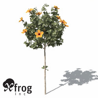 3d model of xfrogplants hibiscus