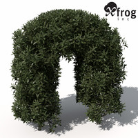 3d model xfrogplants common privet