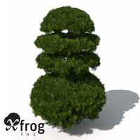 3d xfrogplants golden oriental arborvitae model