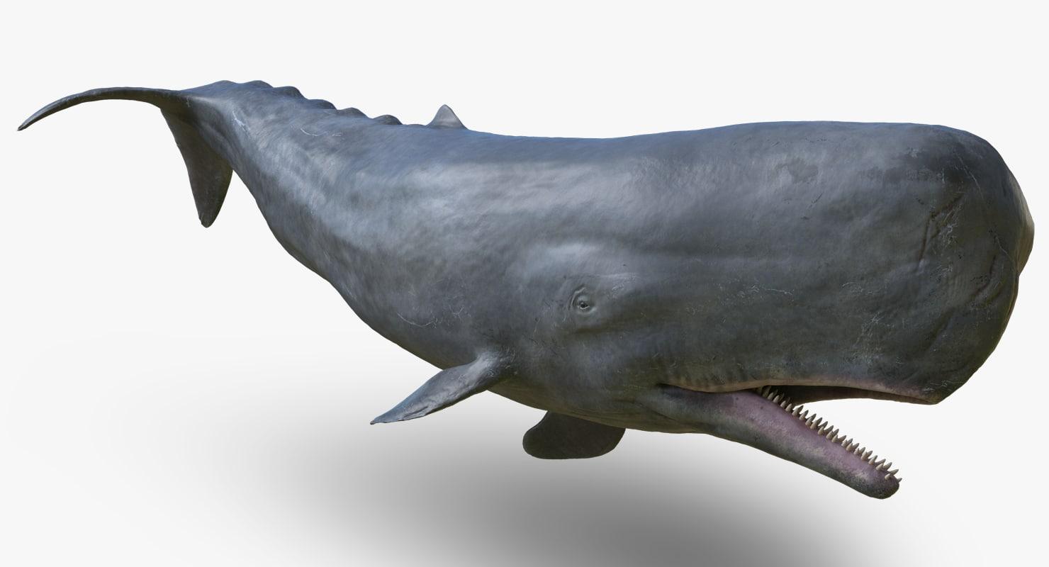 sperm_whale_signature_wides.PNG