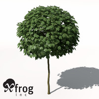 3d xfrogplants norway maple tree