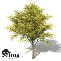 xfrogplants silver wattle 3d max