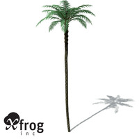 xfrogplants black treefern tree fern 3d model