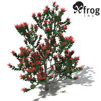 3d xfrogplants ohia lehua tree shrub