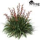 flax lily 3D models