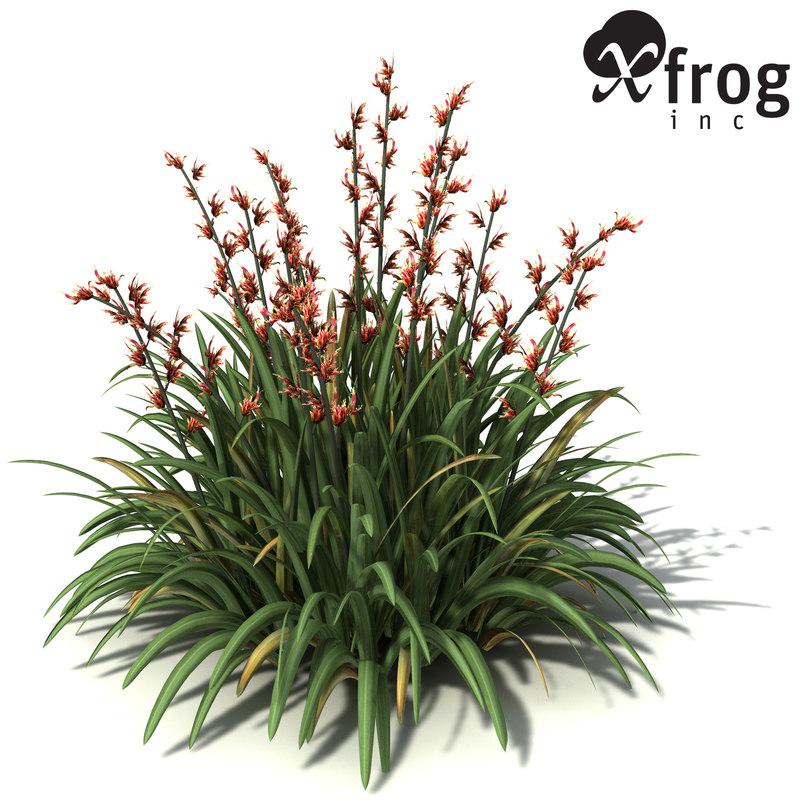 OC18-new-zealand-flax-9.jpg