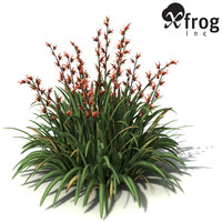 XfrogPlants New Zealand Flax