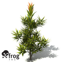 3d model xfrogplants saw banksia tree shrub