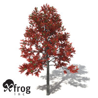 3d model xfrogplants illawarra flame tree