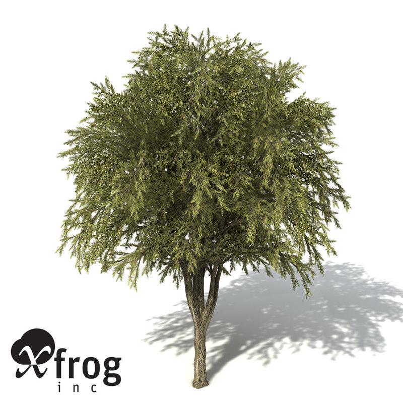 OC28-willow-bottlebrush-9.jpg