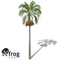 xfrogplants carpentaria palm planted 3ds