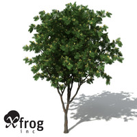 3d model xfrogplants southern mahogany tree