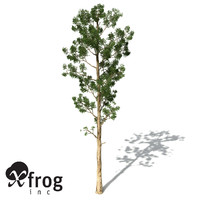 3d xfrogplants karri tree