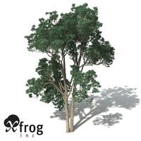 jarrah tree 3d model