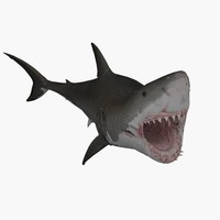 great white shark animal 3d c4d