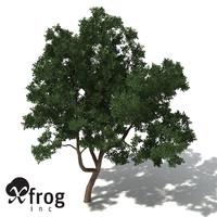 xfrogplants marri tree max