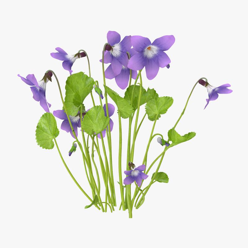 Violet_Natural_Group_Square_0000.jpg