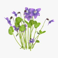 3d violet natural group - model