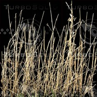 long grass and reeds texture